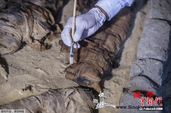 埃及新发现7座古墓葬出土猫和圣甲虫木_埃及-甲虫-考古学家-