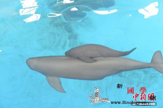 环保督察组:安徽农委对国家江豚保护文_江豚-缓冲区-调整-