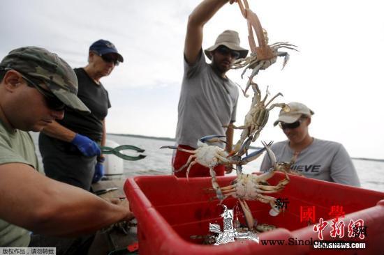 日本一螃蟹拍出12万元天价创世界纪录_吉尼斯世界纪录-螃蟹-标签-