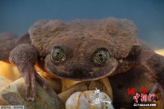 """单身10年!最孤单水蛙""""罗密欧""""或""""_玻利维亚-朱丽叶-罗密欧- ()"""