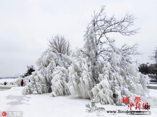 严寒天气已致美国至少21人死亡气温有_芝加哥-美国-严寒-