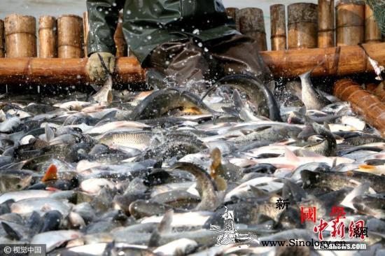 部分地区为环保叫停水产养殖农业农村部_滩涂-水产-养殖-