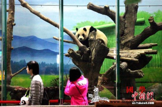 若大陆送高雄两只大熊猫台湾送啥?苏贞_猕猴-熊猫-台北-