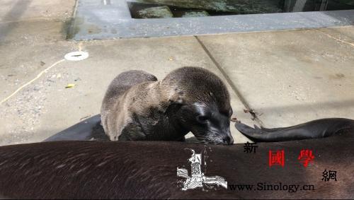 超萌!美动物园迎新生命:小熊猫、海狮_海狮-国史-动物园-