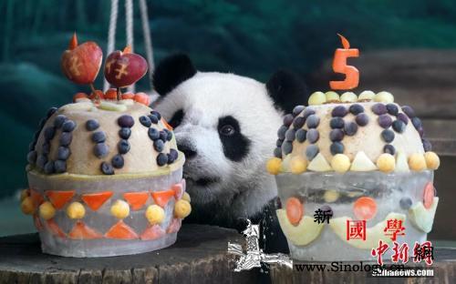 """大熊猫团团圆圆""""台漂""""逾10年女儿圆_熊猫-台北-台湾-"""