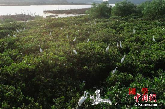 最廉价有效解决方案:种上万亿棵树或能_红树林-湿地-台山市-