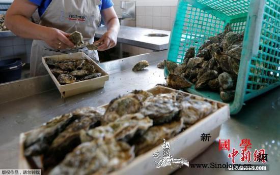 华人海边捡生蚝被调查在海外海鲜不是_捕捞-海鲜-华人-