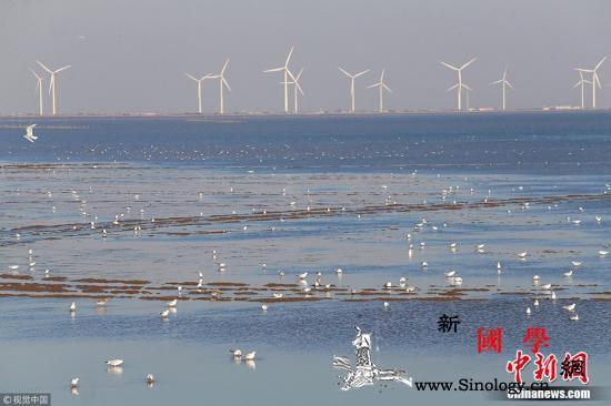五部门:2020年底渤海滨海湿地修复_渤海-滨海-辽宁省-