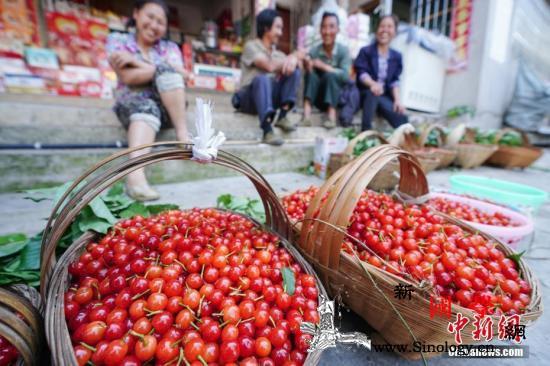 农业农村部:随着夏季时令水果上市果价_同比增长-农产品-猪瘟-