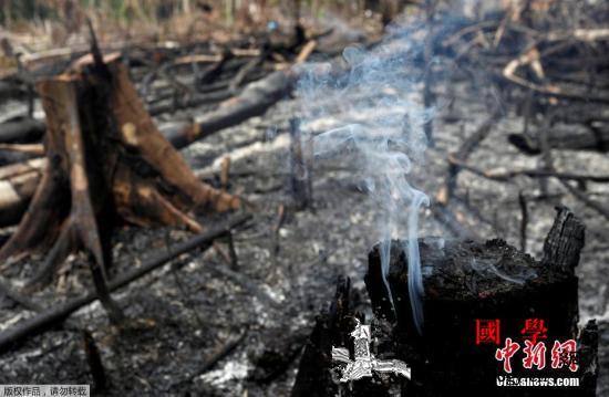 """""""地球之肺""""仍浓烟笼罩联合国吁保护亚_玻利维亚-巴西-圣保罗-"""