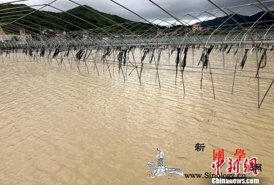 """直击台风""""白鹿"""":农田被淹电网受损民_漳浦县-漳州市-抢修-"""