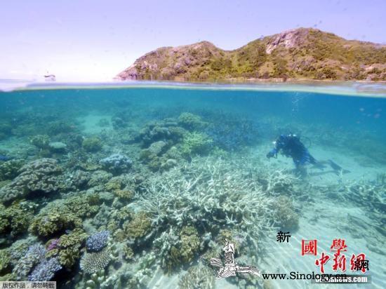 澳夫妇发现巨型浮岩或拯救大堡礁白化珊_霍尔-白化-碎石-