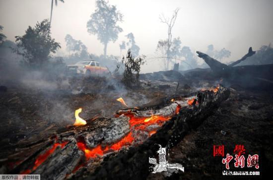 世卫组织:亚马孙大火易引起呼吸系统疾_世界卫生组织-巴西-消防队员-