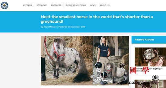 波兰发现世界上最小的马!高度仅为56_吉尼斯世界纪录-贝尔-波兰-