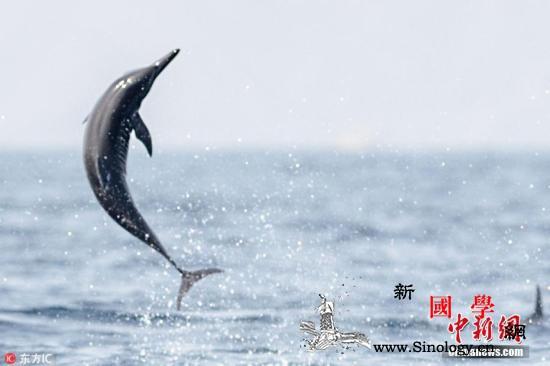 美研究称海豚抗生素耐药性日增海洋生态_抗药性-环丙沙星-致病-