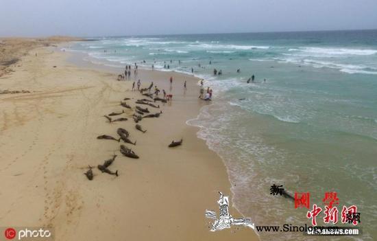 逾100只海豚在西非搁浅死亡或因领队_西非-帕尔-搁浅-