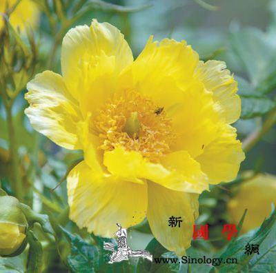 中国那些绿色家园:近200个植物园保_华盖-濒危-珍稀-