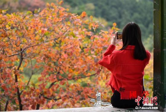 2019北京红叶观赏指南这几个地方必_元宝枫-香山-长城-
