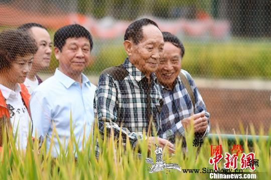 第三代杂交水稻首次专家测产衡南基地平_亩产-稻谷-衡南县-