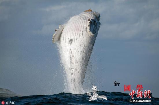 南非政府暂停章鱼捕捞加大对鲸鱼等大型_南非-捕捞-哺乳动物-