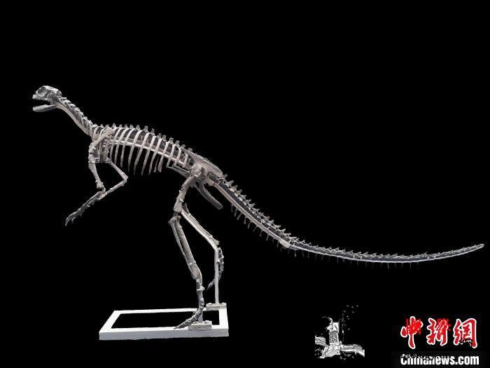 重庆云阳发现亚洲最早的新鸟臀类恐龙化_云阳-磨刀-亚洲-