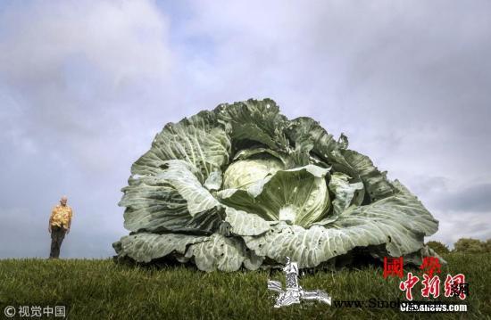 觉得蔬菜吃起来很苦?研究:可能是基因_农场主-苦味-味觉-