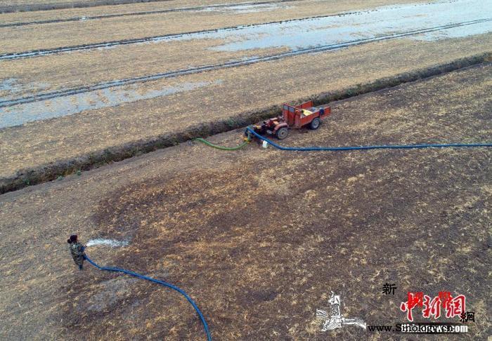 安徽遭遇近40年来最严重的伏秋旱_长丰县-抗旱-水位-