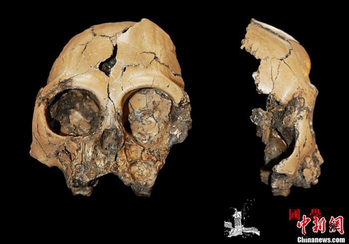 """""""像人又像猿""""的化石被发现能证明进化_田东县-达尔文-古猿-"""