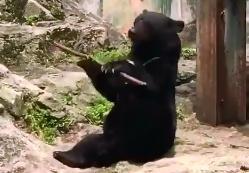 """日本广岛黑熊大秀木棍""""特技""""引游客惊_黑熊-木棍-把玩-"""