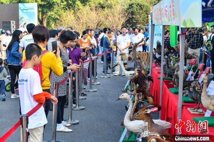 广东启动首届森林文化周民众乐享生态红_南粤-广东省-广东-