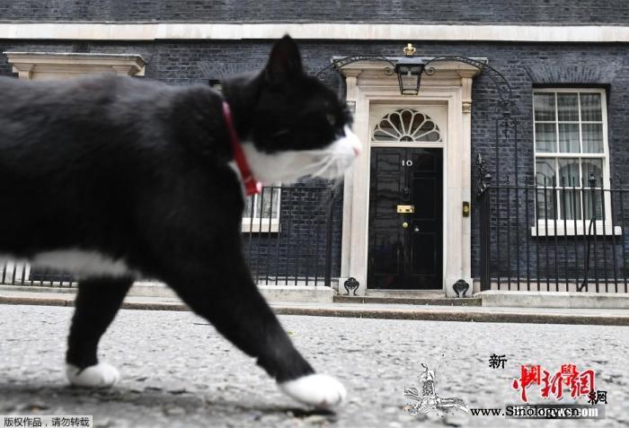 职场如战场!2019猫都觉得工作有_外交部-英国-日本-