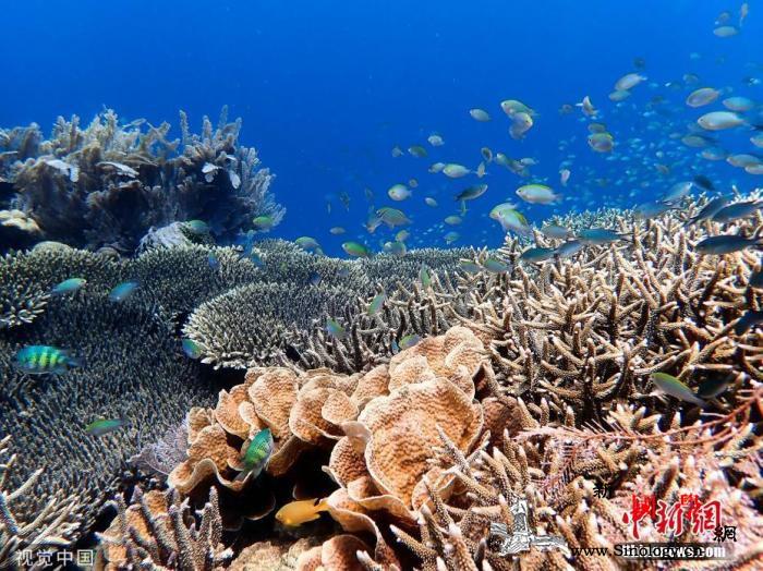 澳大利亚海水将异常升温或致珊瑚礁产生_气象局-白化-珊瑚礁-