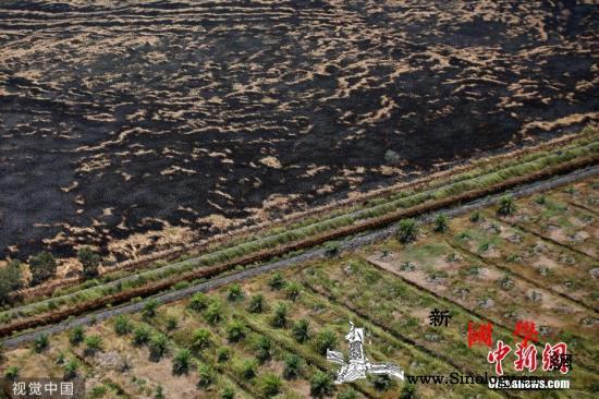 报告:印尼林火造成52亿美元经济损失_加里-世界银行-印度尼西亚-