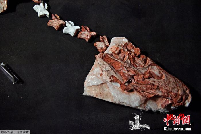 巴西南部出土三叠纪恐龙化石距今已有2_布雷-莱西-巴西-
