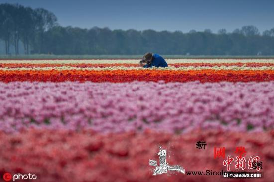 缓解过度旅游、重塑国家形象荷兰:以后_荷兰-海牙-鹿特丹-