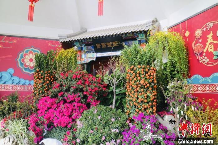 北京市属11家公园及园博馆推出50项_唐花-鼠年-游园-