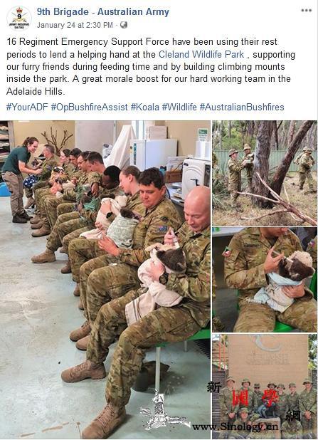 澳军人救火后照顾考拉宝宝网友:你们最_画中画-澳大利亚-救火-