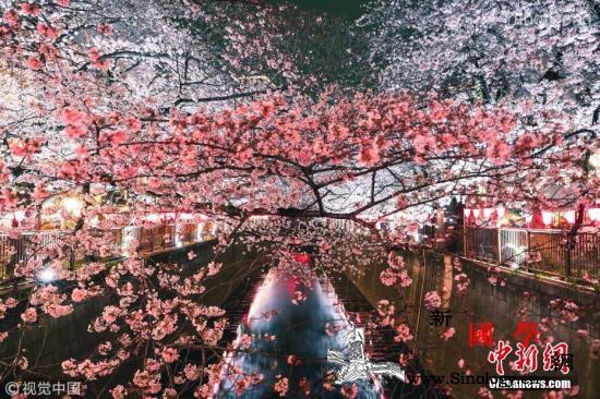 樱花季快来了!日本气象协会公布樱花开_樱花-日本-札幌-