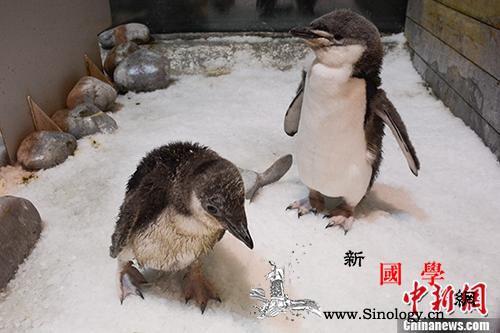 气候变化冲击食物链南极帽带企鹅数量锐_帽带-南极-联合国-