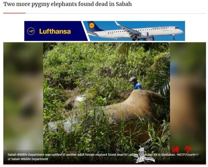 马来西亚沙巴两头矮象死亡首长吁强化执_沙巴-婆罗洲-马来西亚-