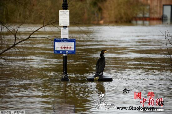 英国降雨不断致多地发生洪灾预计仍持续_渔场-洪灾-英国-