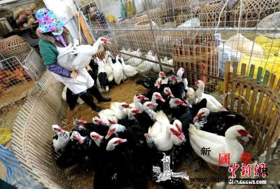 农业农村部:屠宰交易场点发生疑似禽流_屠宰-疑似-疫情-