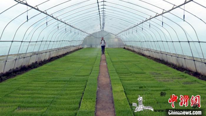 湖南祁阳推动早稻生产粮食企业争当农户_祁阳县-双季稻-育秧-