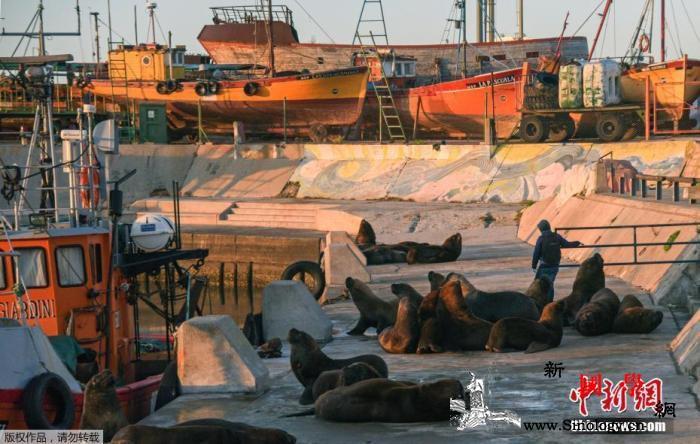 阿根廷将首都的强制性隔离措施延长至5_海狮-阿根廷-马尔-