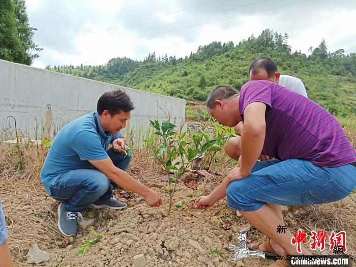"""绿水青山变""""金山银山""""重庆林业实施八_林业局-重庆市-重庆-"""