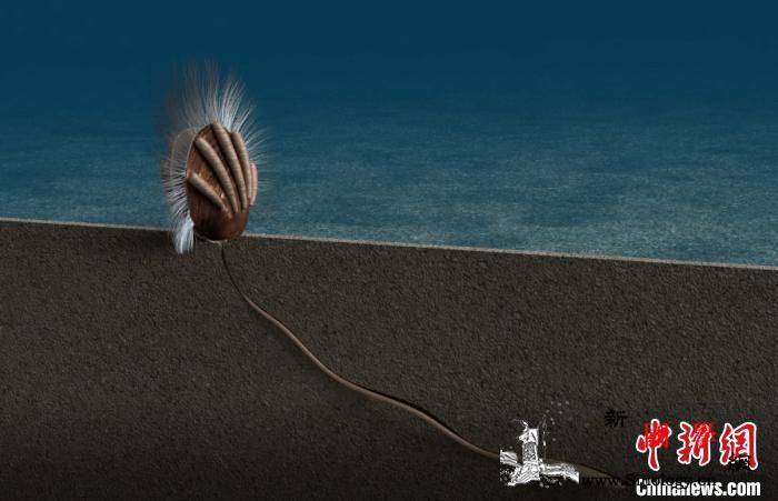 距今约5.12亿年中外合作研究发现地_腕足-寄生-研究发现-