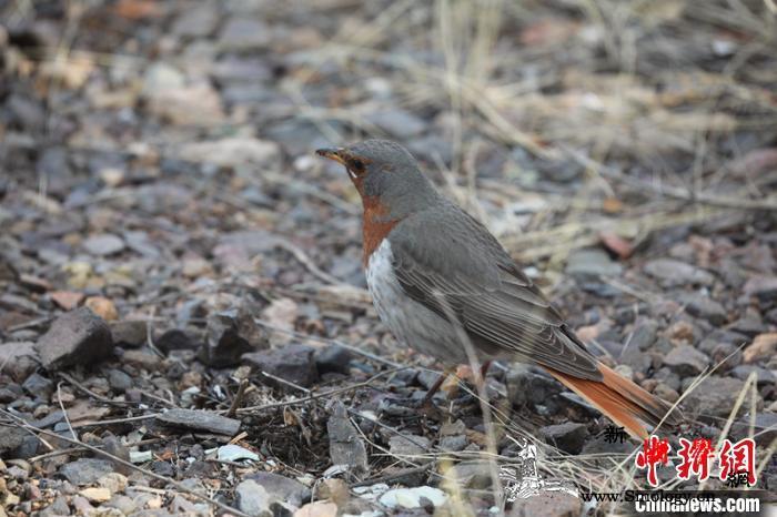 黑龙江呼中国家级自然保护区首次发现赤_欧亚大陆-非洲-黑龙江-