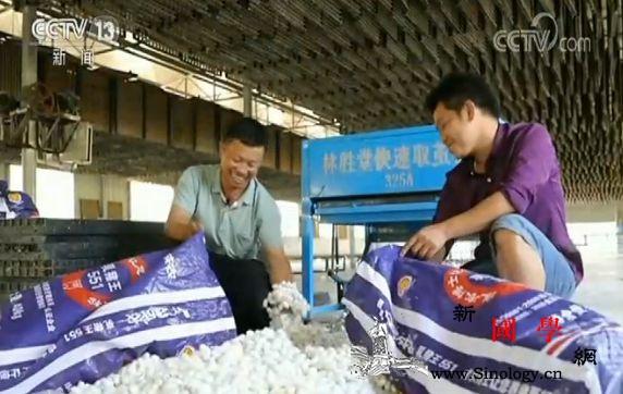 中国生态扶贫主要目标基本完成_桑蚕-贫困户-脱贫-
