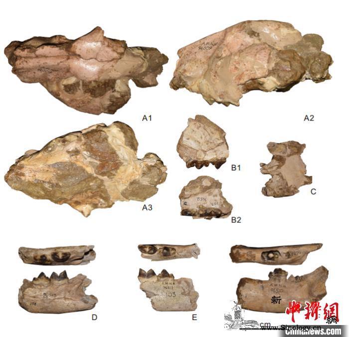 中国科学家在南亚发现美洲豹远古祖先化_南亚-江左-美洲豹-
