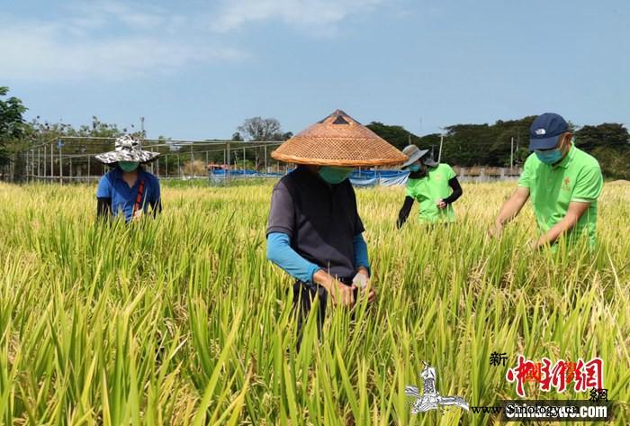 中国援菲农技中心三期项目复工九成_菲律宾-农技-合作项目-